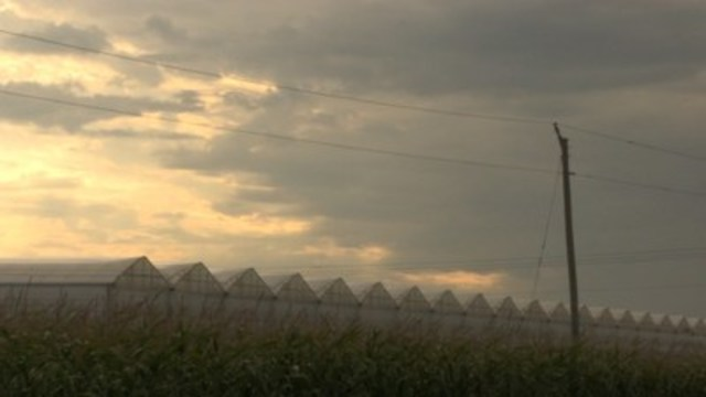 """Still from """"Migrant Dreams."""" Greenhouses in Leamington, Ontario. (CNW Group/TVO)"""