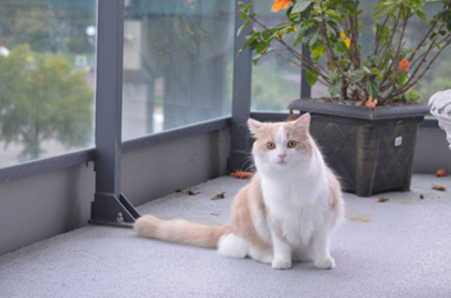 No pet should ever be left on a balcony all day, but there are ways to make a balcony suitable and safe for your pet. Place protective fencing against the balcony's rails to keep the pet securely inside. Depending on the size of your pet, you may need to add height to the railing to keep the animal from jumping over. Pay attention to your pets when windows are open or when pets are on the balcony, and never leave them unattended. (CNW Group/Toronto Hydro Corporation)