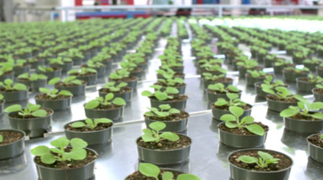 Video: Medicago's Commercial-Scale Facility