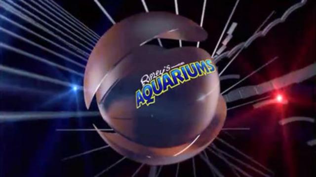 Video: Ripley's Aquarium of Canada's Spot the Sea Turtle predicts the NCAA March Madness championship game winner