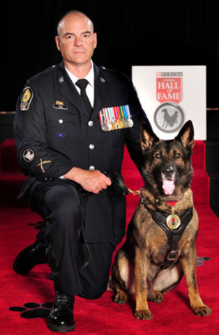 Teak, a Police Service Dog from Vancouver, British Columbia, was inducted into the Purina Animal Hall of Fame today. Teak chased down and caught a dangerous suspect, who then slashed Teak numerous times on the neck with a knife. Throughout, Teak did not release his grip, which enabled officers to capture the dangerous suspect. (CNW Group/Purina Animal Hall of Fame)