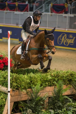 """""""Seven-time winner Waylon Roberts of Port Perry, ON, was back to score victory in the $20,000 Horseware Indoor Eventing Challenge on opening night of the Royal Horse Show® in Toronto, ON."""" Photo by Ben Radvanyi Photography, www.benradvanyi.com (CNW Group/Royal Agricultural Winter Fair)"""