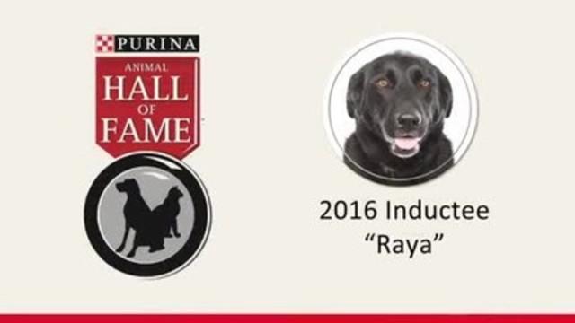 Video: Raya