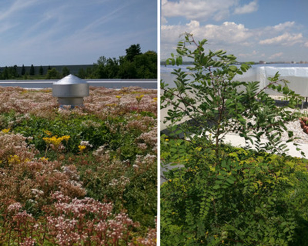 "The extensive system on the left is a technologically advanced system using synthetic retention layers with no ""loose"" growing medium. It is lower in maintenance and lighter in weight when comparing to the photo on the right, an extensive system with 4"" of growing medium. The thicker green roof system is not only heavier: it is overrun by harmful and aggressive trees and requires  significantly more maintenance at this point. (CNW Group/Xeroflor Canada Inc)"