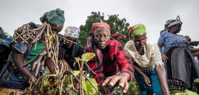 Des agricultrices à l'oeuvre.  Des chercheurs du Kenya Agricultural Research Institute (KARI) et de l'Université McGill travaillent avec ces femmes en vue de favoriser l'adoption généralisée de pratiques culturales plus productives et de semences résilientes à rendement élevé. (Groupe CNW/Centre de recherches pour le développement international)