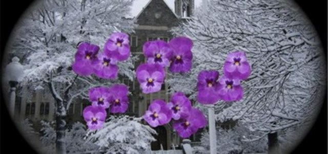 """Image description: The image is based on the following description provided by a patient with glaucoma. The patient is quoted as saying, """"My walls are covered in these purple flowers. Even when I go outside, the lawns and pathways are a sea of these same purple flowers."""" Photo credit: Charles Bonnet Foundation Australia (CNW Group/CNIB)"""