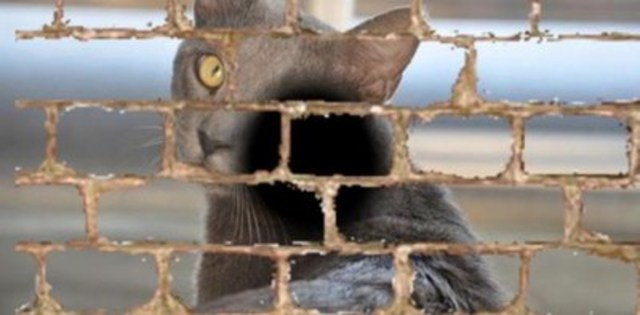 """Image description: The image is based on the following description provided by a patient with age-related macular degeneration. The patient is quoted as saying, """"Everywhere I look I see brickwork. When I look at my cat, its face is embedded in the bricks."""" (CNW Group/CNIB)"""