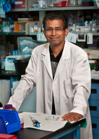 Dr. Senthil Muthuswamy's lab is the first to develop and use a 3-D model of pancreatic ducts to study how this devastating cancer starts and progresses. (CNW Group/Canadian Cancer Society (National Office))