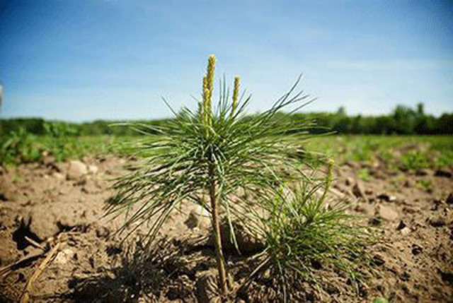 Attend a free landowner workshop in Ontario, happening this summer and fall, as hosted by Trees Ontario, the Ontario Forestry Association and partners. Visit www.treesontario.ca for more information. (CNW Group/Trees Ontario)