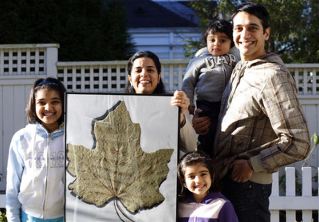 The largest maple leaf measured 53 cm (20.86 in) wide and 52.2 cm (20.55 in) long and was discovered by Vikas Tanwar and family in Richmond, BC on 14 December 2010. (CNW Group/Guinness World Records)