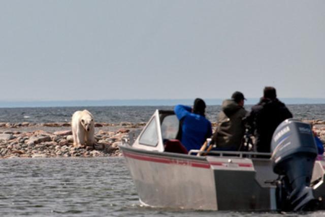 Safari avec les narvals et les ours polaires, NU. - Michelle Valberg/Arctic Kingdom Polar Expeditions (Groupe CNW/Canadian Tourism Commission)