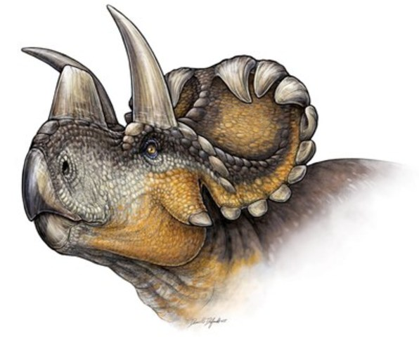 Life reconstruction of Wendiceratops pinhornensis. Credit: Danielle Dufault. (CNW Group/Royal Ontario Museum)