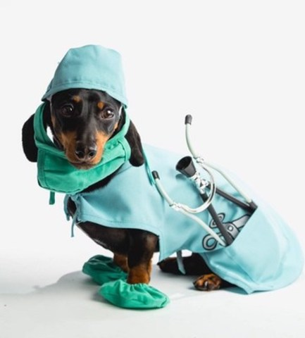 Results of a recent poll reveal that 80 per cent of Canadian pet owners are concerned with flea and tick bites and 7 in 10 want protection that reduces the chances of these parasites biting their pets. Crusoe the Celebrity Dachshund is travelling across Canada to educate pet owners that #NoBiteIsRight and encouraging them to talk with their vets. (CNW Group/Bayer Inc.)