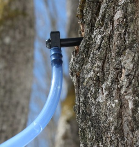 5 millions taps represent investments of $100 million in sugar bushes (CNW Group/Federation of Quebec Maple Syrup Producers)
