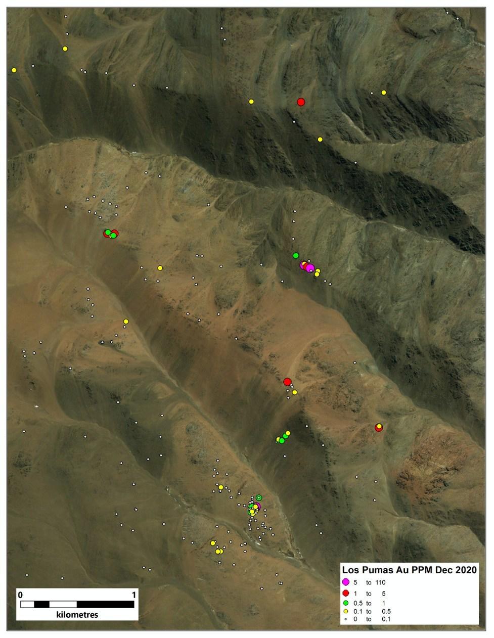Figure 3. Au values at Los Pumas (CNW Group/Sable Resources Ltd.)