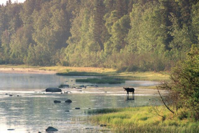 La forêt boréale canadienne, qui s'étend sur 58 % de notre territoire, comprend d'innombrables lacs, cours d'eau et milieux humides. Elle offre l'une des perspectives les plus prometteuses pour la conservation dans le monde. (Groupe CNW/CANARDS ILLIMITES CANADA)