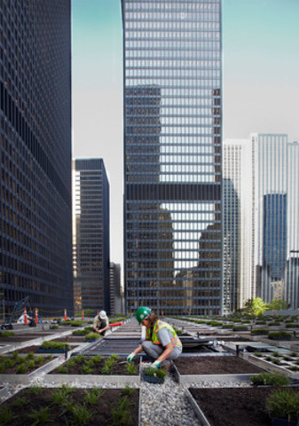 TDC Green commitment includes new living roof atop the TD Centre pavilion at the corner of King and Bay streets, Toronto. (CNW Group/Cadillac Fairview Corporation Limited)