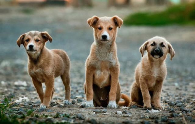 La raison d'être de l'Escouade de recherche est d'offrir une plateforme gratuite, favorisant l'implication citoyenne, pour diminuer le nombre d'animaux en situation d'errance. (Groupe CNW/Azoome Identification)