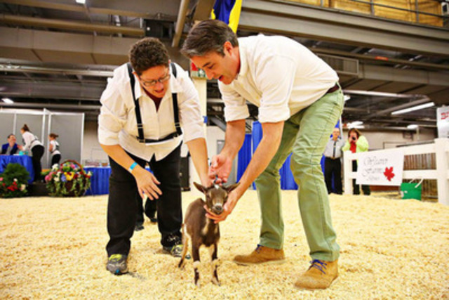 """Ben Mulroney learned how to exhibit a Nigerian Dwarf Goat this weekend at the 91st Royal Agricultural Winter Fair in Toronto. He participated in the special """"Celebrity Novice Showmanship Class"""" with the help of Angee Pell. Photo Credit: Nina Linton Photography. The Royal Chef Challenge Finale, hosted by Chef Curtis Stone, takes place Saturday November 9th at 2PM and is free with general admission. (CNW Group/Royal Agricultural Winter Fair)"""