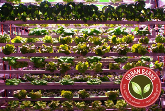 La Grande Muraille de Laitue n'est qu'une des preuves que chez Urban Barns, il y a des merveilles tant pour les papilles gustatives que pour les yeux (Groupe CNW/Urban Barns Foods Canada Inc.)