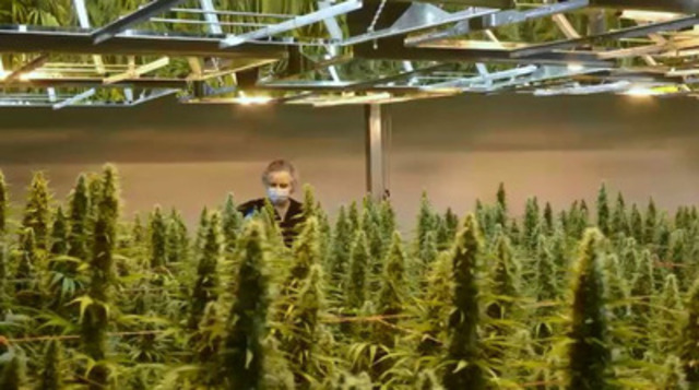 Video: B-roll - First Health Canada Approved Medical Cannabis Clinical Trial Starts Patient Recruitment