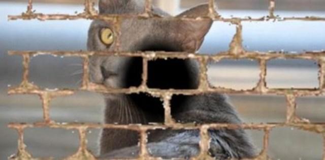 Cette image est fondée sur la description suivante fournie par un patient atteint de dégénérescence maculaire liée à l'âge. « Peu importe où je regarde, je vois du briquetage. Lorsque je regarde mon chat, son visage se noie dans un mur de briques. » (Groupe CNW/INCA)