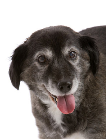 Most signs of aging are found inside your pet. Your veterinarian is trained to pick up on changes in your pet, and can diagnose and treat disease before it worsens. (CNW Group/Canadian Animal Health Institute)