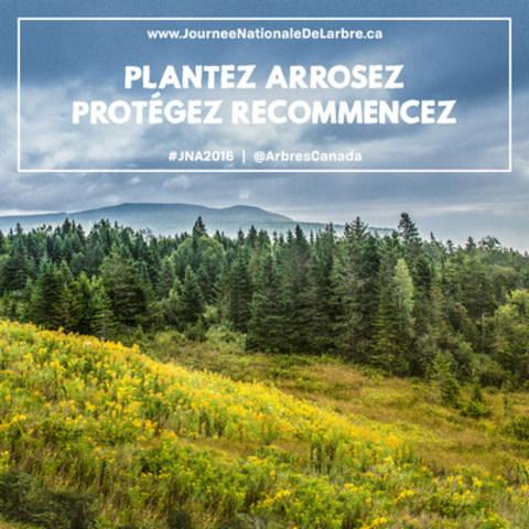 La Journée nationale de l'arbre est un jour durant lequel les Canadiens sont invités à célébrer les arbres et les nombreux bienfaits qu'ils offrent, comme de l'air plus pur, un habitat pour la faune et même des économies sur les dépenses d'énergie. (Groupe CNW/Tree Canada)