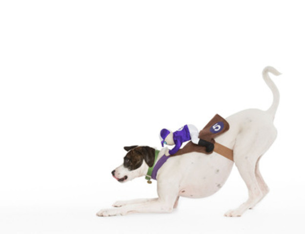 HENRY - the race horse - WHY WE LOVE THIS COSTUME: Henry is an energetic pup and this jockey hangs on for dear life! This costume doesn't have a lot to move around, it allows for the collar and leash, and doesn't obstruct his vision. (CNW Group/Toronto Hydro Corporation)