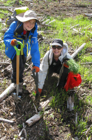 Since 1972, Scouts of all ages have planted over 80 million trees across Canada. (CNW Group/Scouts Canada)