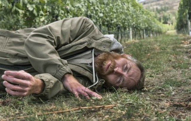 Vincent van Gogh lookalike Daniel Baker listening to the ground in the Pinot Noir vineyard at Martin's Lane Winery in the Okanagan Valley, British Columbia. (CNW Group/VMF Estates)