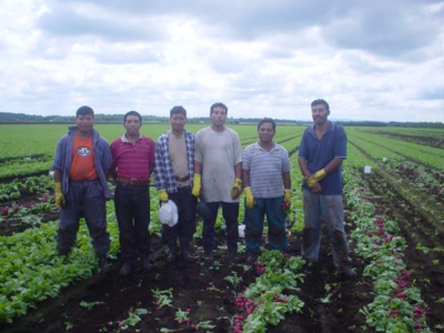 Travailleurs agricoles étrangers dans les champs du Québec (Groupe CNW/F.E.R.M.E.)