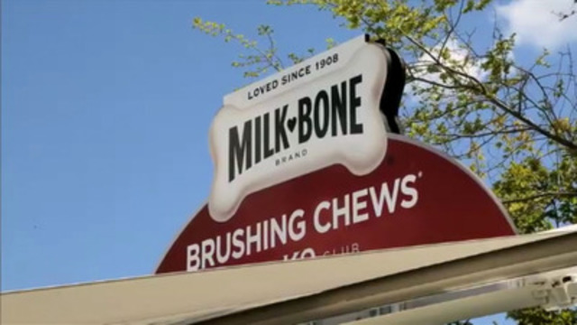 Video: Research indicates that only half of dog owners are aware they should brush their dog's teeth, and very few actually comply, as it is difficult for the owner and uncomfortable for the pet. Milk-Bone* Brushing Chews*  are available wherever Milk-Bone products are sold.