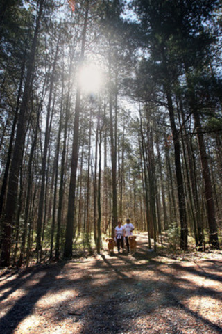 Healthy forests support healthy people, resilient ecosystems and a sustainable economy. (CNW Group/Trees ...