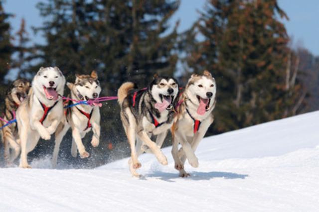 Les Montréalais pourront s'initier gratuitement ce samedi au traîneau à chiens au parc Sauvé à Montréal-Nord. Cette activité sera offerte, de 12 h à 16 h, aux visiteurs de la Fiesta hivernale qui se tiendra à l'occasion des célébrations du centenaire de l'arrondissement. (Groupe CNW/Arrondissement de Montréal-Nord (Ville de Montréal))