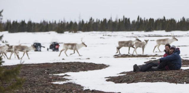 Laissez-vous émerveiller par le spectacle tonitruant de l'une des plus grandes hardes actuelles de caribous lors de la migration printanière qui l'amène vers son territoire de mise bas. (Groupe CNW/Destination Canada)