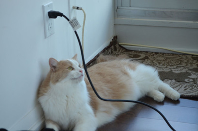 Dangling electrical cords are tempting to cats. Keep them out of sight and check for frayed cords regularly. (CNW Group/Toronto Hydro Corporation)