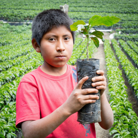 Due to poverty, children under the age of 13 in Guatemala are forced to work 8 to 10 hours in coffee and vegetable farming every day and are unable to attend school. Much of what they produce is exported to other countries like Canada. (CNW Group/World Vision Canada)