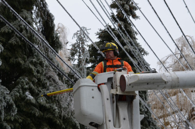 Toronto Hydro at Work: ice storm restoration efforts - Islington Avenue. Toronto Hydro's forester Dave Knight works high above to clear frozen tree limbs on Islington Avenue, south of Eglinton Avenue. Much of the restoration so far has been cleanup which has to be done before electrical repairs can be completed. (CNW Group/Toronto Hydro Corporation)