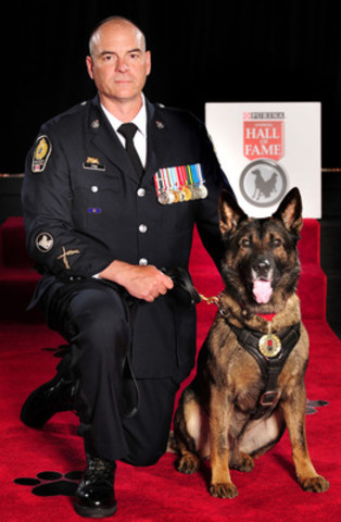 Teak, un chien policier de Vancouver, en Colombie-Britannique, a été intronisé aujourd'hui au Temple de la renommée des animaux Purina. Teak a poursuivi et rattrapé un dangereux suspect, qui lui a infligé de nombreux coups de couteau au cou. Malgré tout, Teak n'a jamais lâché prise, ce qui a permis aux policiers de capturer l'individu. (Groupe CNW/Purina Animal Hall of Fame)