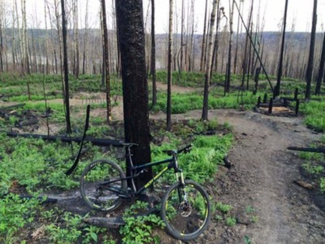 Une bicyclette apposée contre un arbre brûlé au Wood Buffalo Cycling Club à Fort McMurray, ...