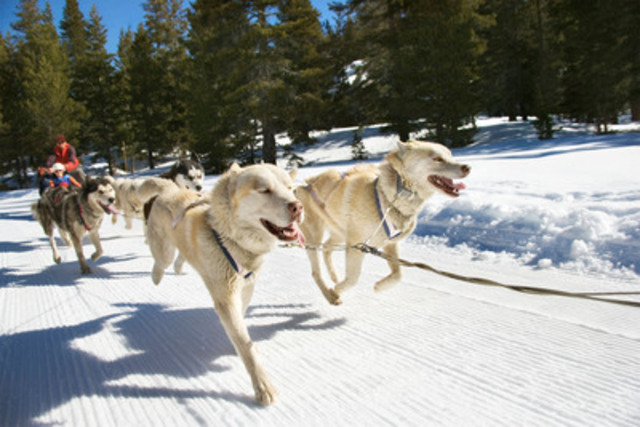 Dog sledding is one of many exciting attractions to experience this winter (CNW Group/Hotels.com)