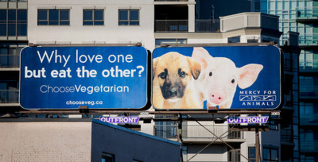The eye-catching billboard, located on Lakeshore Road (CNW Group/Mercy For Animals Canada)