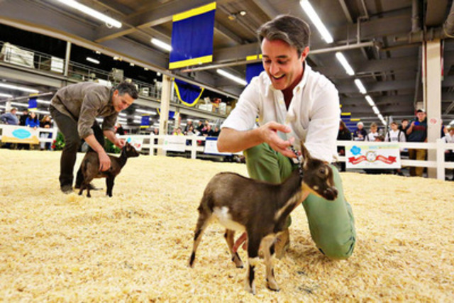 "Bob Blumer and Ben Mulroney learned how to exhibit Nigerian Dwarf Goats this weekend at the 91st Royal Agricultural Winter Fair in Toronto. They participated in the special ""Celebrity Novice Showmanship Class"". Photo Credit: Nina Linton Photography. The Royal Chef Challenge Finale, hosted by Chef Curtis Stone, takes place Saturday November 9th at 2PM and is free with general admission. (CNW Group/Royal Agricultural Winter Fair)"