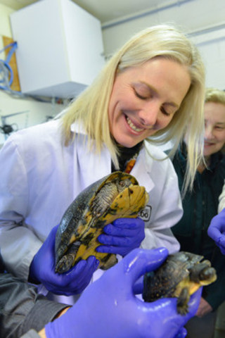On February 9, 2016, the Honourable Catherine McKenna, Minister of the Environment and Climate Change, and Minister responsible for Parks Canada, holds a Blanding's turtle during a visit to the Toronto Zoo. Parks Canada and the Toronto Zoo have partnered on a project to restore Blanding's turtles—, a species-at-risk—, to Rouge National Urban Park. (Photo: Stephanie Lake, Canadian Press) (CNW Group/Parks Canada)