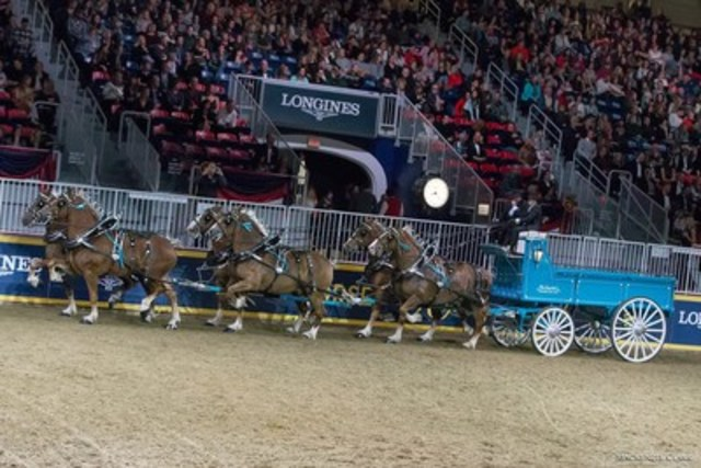The Country Lane Belgians finished second in the $25,000 Royal Six-Horse Championship after winning the $2,500 Belgian Six-Horse Hitch class earlier in the week. Photo by Mackenzie Clark (CNW Group/Royal Agricultural Winter Fair)