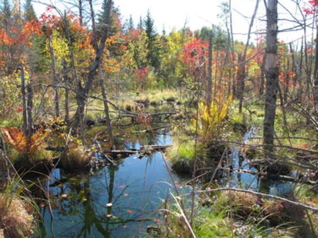 Tourbière Red Mill, Trois-Rivières © Nature-Action Québec (Groupe CNW/Fondation Hydro-Québec pour l'environnement)