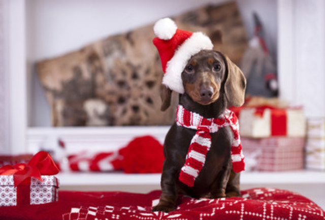 Giving and receiving of all sorts of gifts is part of the Christmas tradition, however pets make terrible presents. Much thought, research and preparation need to be considered before making the decision to give a pet, large or small. (CNW Group/Canadian Animal Health Institute)