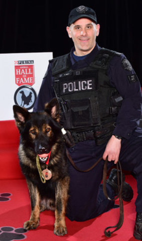 Toronto Police Service Dog, Lonca, was inducted today into the 2016 Purina Animal Hall of Fame as Service Dog of the Year. (CNW Group/Nestle Purina PetCare)