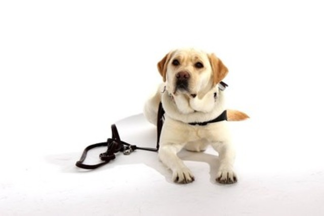 PTSD Service Dog Thai (CNW Group/Wounded Warriors Canada)